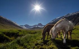 Обои пейзаж, горы, кони, утро