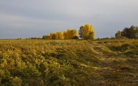 Обои даль, Осень, деревья