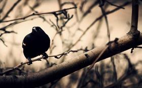 Обои ветки, дерево, птица