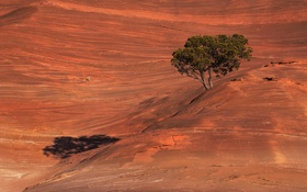 Обои пейзаж, дерево, склон, гора