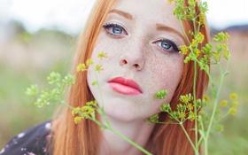 Картинка взгляд, веснушки, рыжеволосая