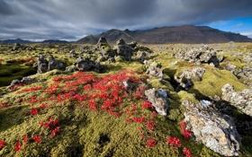 Обои rock, field, iceland, basalt