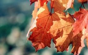 Обои осень, листья, солнце, макро, лучи, природа, фото