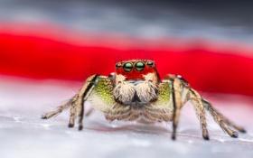 Картинка макро, паук, насекомое