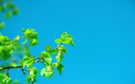 Обои небо, природа, ветка, весна
