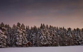 Обои зима, лес, небо, снег, деревья, пейзаж, природа