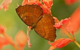 Картинка цветок, листья, природа, бабочка, растение, крылья, насекомое
