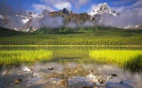 Обои лес, трава, горы, озеро, камни