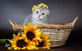 Картинка подсолнухи, цветы, корзина, киса, венок