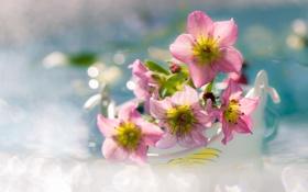 Обои макро, цветы, блики, розовые