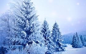 Обои зима, снег, деревья, природа, елки, ели, мороз
