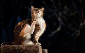 Картинка кошка, боке, солнечный свет