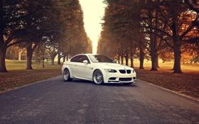 Картинка осень, белый, деревья, бмв, BMW, white, E92