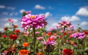 Картинка поле, небо, облака, цветы, стебли, лепестки