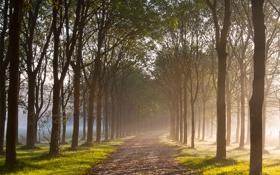 Обои дорога, осень, природа, роса, утро, алея