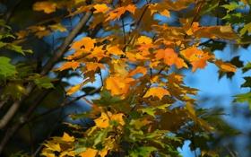 Обои листья, осень, небо, дерево