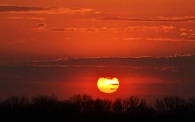 Картинка небо, солнце, облака, деревья, закат