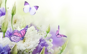 Обои бабочки, цветы, бутоны, хризантемы, flowers, butterflies, buds