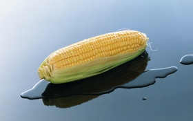 Обои вода, природа, кукуруза, початок