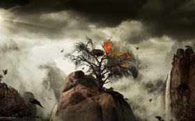 Картинка птицы, дерево, скалы, огонь, desktopography