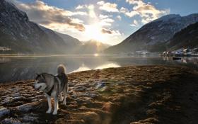 Картинка горы, природа, озеро, друг, собака, утро