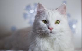 Картинка кошка, глаза, шерсть, кошак