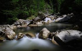 Обои лес, ручей, камни, поток