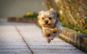 Картинка улица, собака, бег