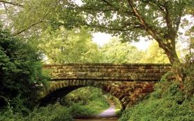 Картинка деревья, мост, природа, парк, дорожка