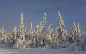 Обои зима, лес, снег, деревья, ель, хвойные