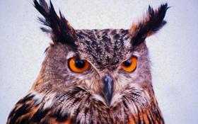 Картинка глаза, взгляд, сова, уши, питца