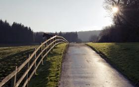 Обои забор, конь, дорога