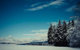Картинка лес, снег, горы