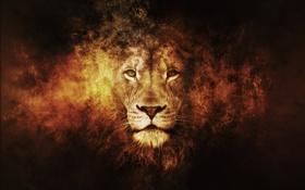Картинка animals, lion, лев, Fantasy
