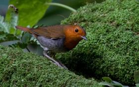 Обои мох, птица, природа, оперение, зелень, коричневая