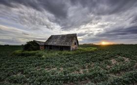 Картинка поле, дом, утро