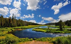 Обои небо, трава, деревья, природа, река, фото, красота
