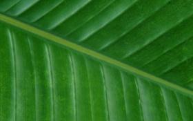 Обои лист, зеленый, фон, текстура