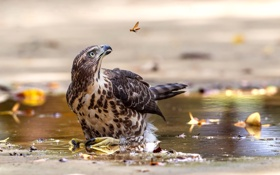 Обои птица, клюв, насекомое, вода