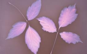 Картинка листья, осень, природа, цвет
