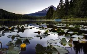 Картинка пейзаж, природа, озеро, лилии, гора