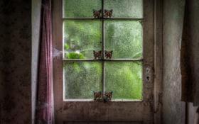 Картинка фон, паутина, дверь