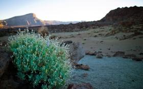 Обои камни, трава, холмы, растение, скалы, зелень, куст