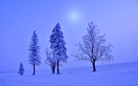 Обои пейзаж, поле, мгла, дымка, елочка, деревья, мороз