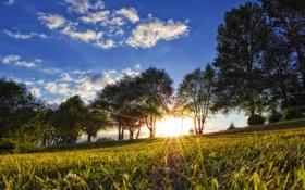 Обои трава, макро, лучи, свет, деревья, дерево, пейзажи