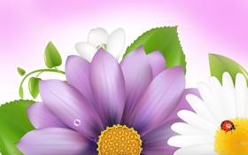 Обои цветок, коллаж, божья коровка, насекомое, открытка, лепестки