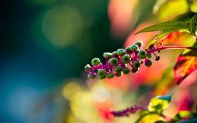 Обои растение, блики, яркие, природа, цвета, боке