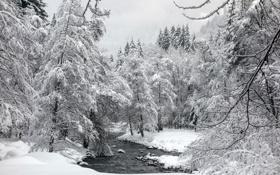 Картинка зима, пейзаж, река, лес
