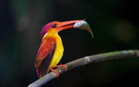 Картинка природа, птица, рыба