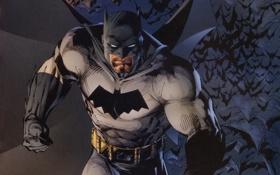 Обои бэтмен, летучие мыши, комикс